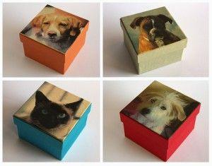 Cajas Animales TodoenCaja